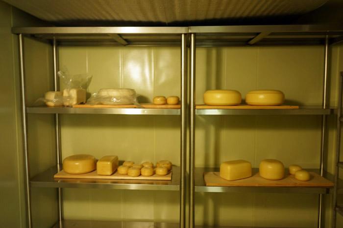 ▲ 숙성 중인 애심목장 가우다 치즈