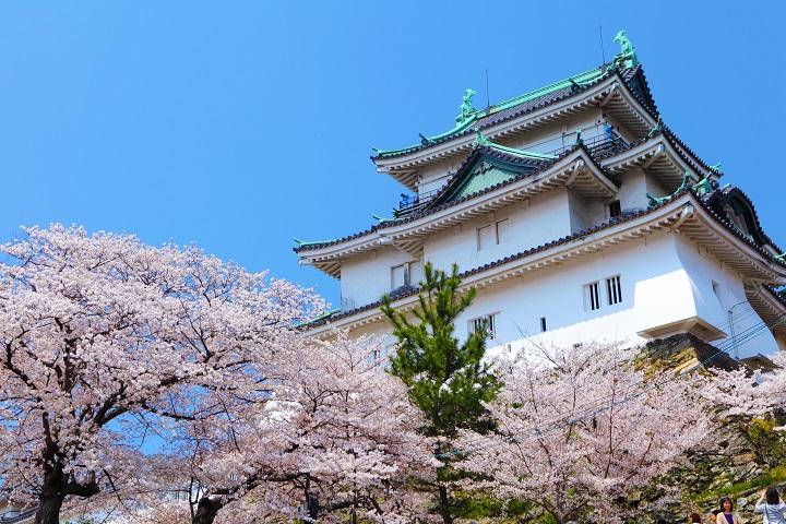 Wakayama Castle with sakura