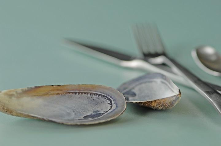 Muschel, Miesmuschel, Besteck, blue mussel, knife, frok, spoon